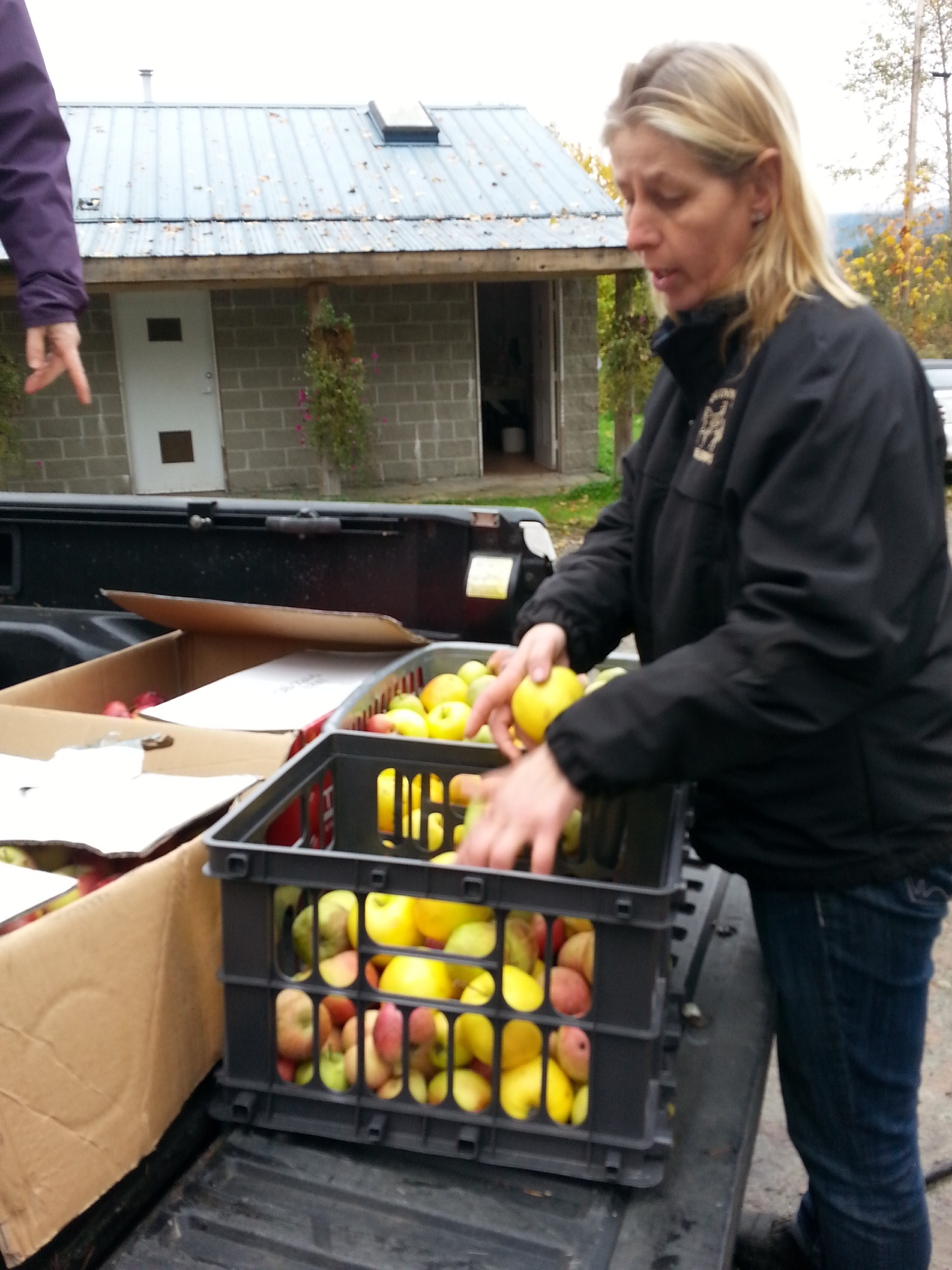 Sorting through the apples
